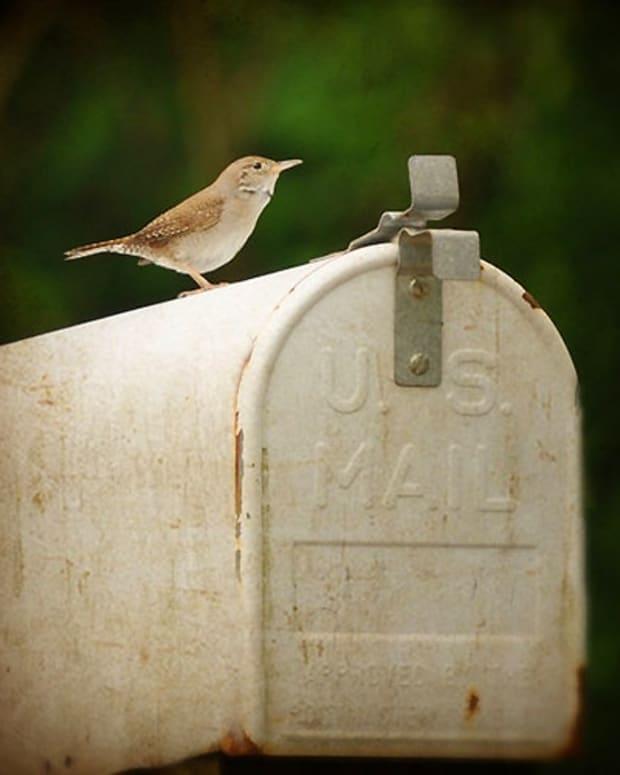 vintage mailbox_bird