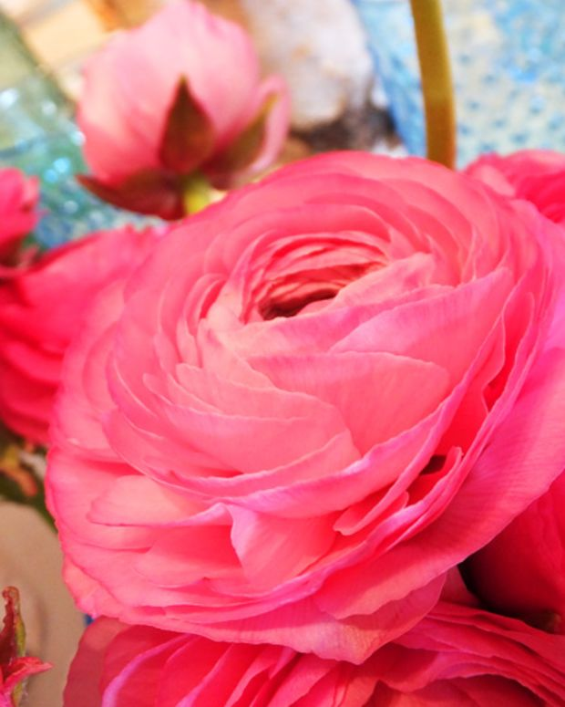 BEAUTYGEEKS: Indigo Books spring 2013 preview_faux ranunculus
