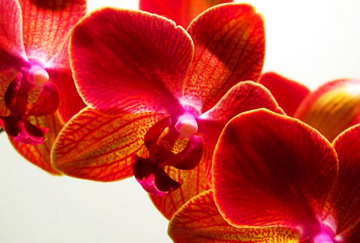 Two thumbs up for orchid plants – they're usually safe for flower-allergic noses.