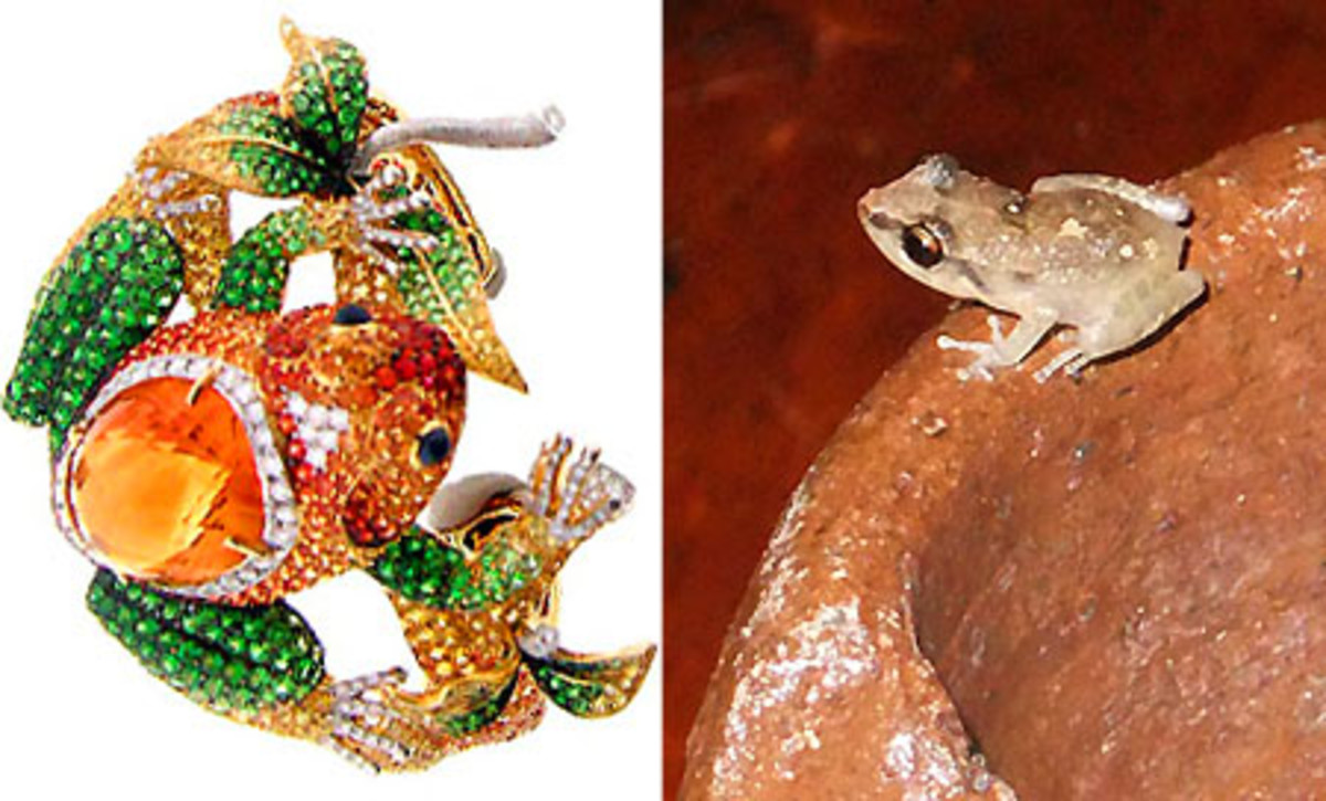 Nini Hale Frog Cuff_little St. Lucian frog