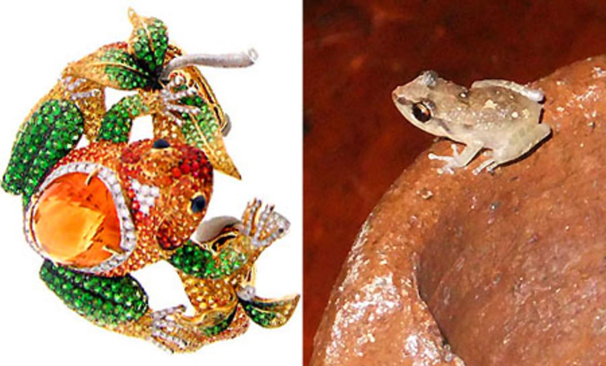 Nini Hale Frog Cuff_little St. Lucian frog