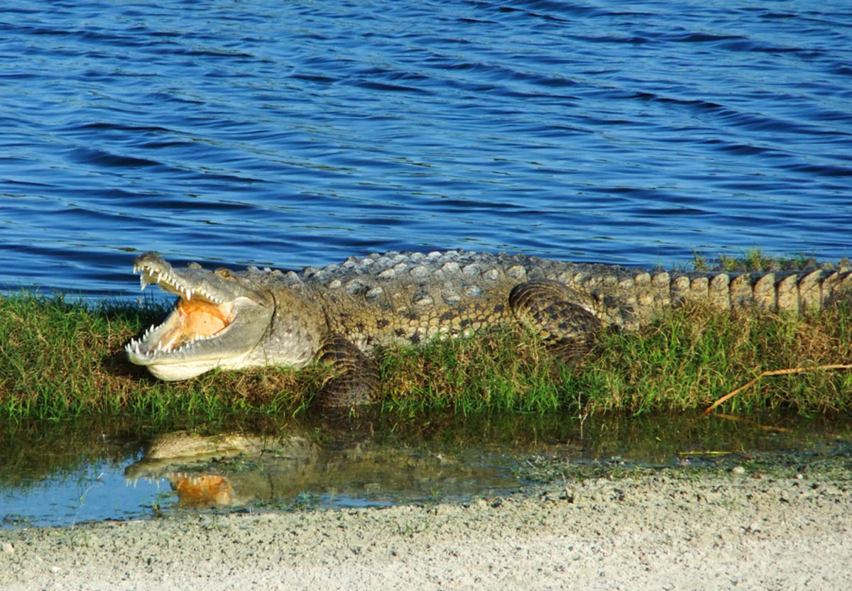 Excellence Playa Mujares_golf course alligator or croc